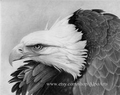 Eagle Pencil Drawing realistic wildlife drawing with bald eagle in flight patriotic eagle picture 8x10 fine art print or matted print #Etsy #Share #EtsyShop Shared by #BaliTribalJewelry http://etsy.me/1sDZ302