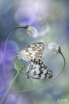 ~~You and Me | Butterfly duo bokeh by JAM - 2012~~