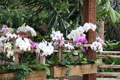 orchideeen tuinen - Google zoeken