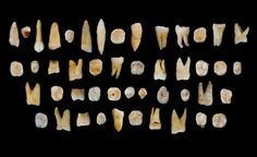 Teeth from a cave in China suggest that modern humans lived in Asia tens of thousands of years before they reached Europe, researchers say. The finding sheds light on the dispersal of Homo sapiens out of Africa and across the globe. Early Humans, First Humans, Fresco, Art Rupestre, Human Teeth, Human Pictures, Living In China, Change Picture, Human Evolution