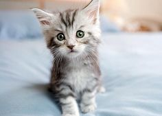 Absolutely Adorable Kitten Photos : Too Cute : Animal Planet