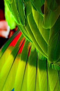 Treehouse parrot wing feathers and tail feathers # birds in love Shades Of Green, Red Green, Green Colors, Palette Verte, Paradis Tropical, Parrot Wings, Foto Macro, Beste Tattoo, Patterns In Nature