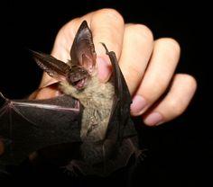 Smile & say cheese! Adorable bat.