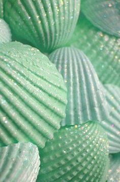 (mint green color shells) _ paint the shells in sea colors and sprinkle with clear glitter, put in a big vase or bowl Seashell Art, Seashell Crafts, Beach Crafts, Diy Crafts, Seashell Ornaments, Summer Crafts, Seashell Wind Chimes, Seashell Painting, Stone Painting