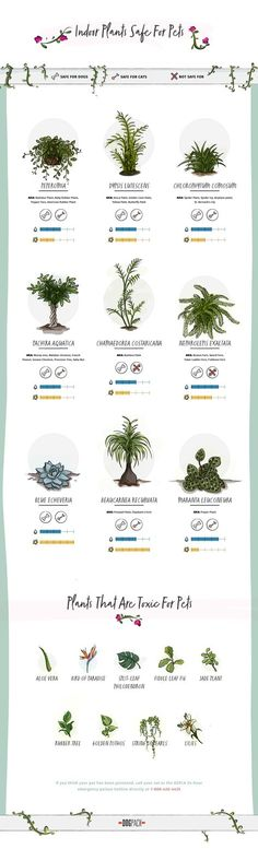 Plants that are poisonous for dogs and cats.