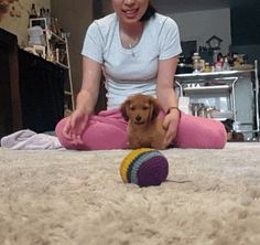 Meet pretzel. Awww the cuteness  level. Would love to get a doxie