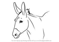 Learn How to Draw a Donkey Face (Animal Faces) Step by Step Flower Drawing Tutorials, Flower Drawings, Donkey Drawing, Mules Animal, Cute Donkey, Easy Animals, Plant Drawing, Learn To Draw, Learn Drawing
