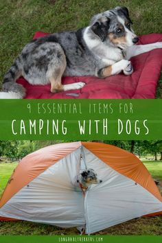 Before you head out on your next camping trip with your pup, check to make sure you include the essential dog camping gear we can't live without.