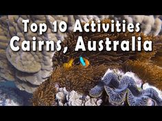 Top 10 Things to Do in Cairns, Australia   Best Activities in Tropical North Queensland - YouTube