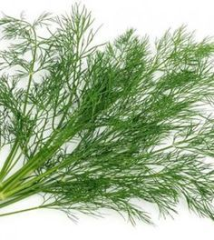 Dill: How to Make & Health Benefits Holistic Medicine, Juice Smoothie, Healing Herbs, Health Eating, Jaba, Natural Cures, Permaculture, Herbal Remedies, Organic Recipes