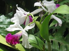 My own pic from Hawaii...wish I was there. The orchids and flowers are unreal.
