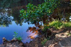 Die Dresdner Heide in der warmen Jahreszeit, Portfolio von Wald-Fotos aus Sachsen, Lichtstimmungen und Holz // portfolio of photography, forest and landscape, trees and wood
