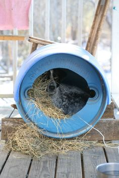 Here is how to build a dog house cheap from a barrel. This dog house cost us nothing, it's super easy to build and the dog loves it! Add this to your dog house ideas and your DIY dog house plans. Small Dog House, Build A Dog House, Dog House Plans, Build Your Own Shed, Small Dogs, House Building, Green Building, Building Plans, Cheap Dog Houses