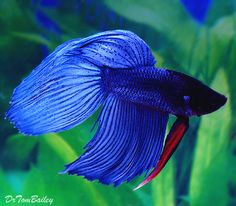 Instructions for how to take care of Betta fish