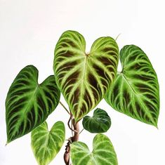Natural Farming, Organic Farming, Growing Plants, Growing Vegetables, Indoor Garden, Indoor Plants, Natural Insecticide, Rare Plants, Back Gardens