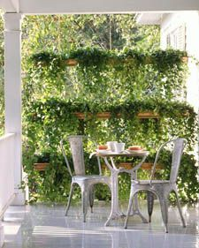 Copper gutters used as planters, planted with trailing ivy, hung to create a privacy screen.