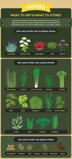 How to store dry herbs