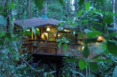 Tree House Lodge, Costa Rica - Deep in the thick Costa Rican forest, an all-wood lodge sits high in the trees.