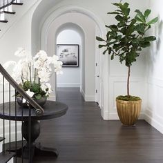 Featured in @archdigest designer Adam Hunter featured an 8' Lyrata Standard tree and a Fiddle Leaf Fig Tree planted in an Inner Gardens stone Pillow Planter with a custom gold finish. Photo: Stephen Busken