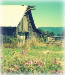 lovely. old barns + flowers = perfection.