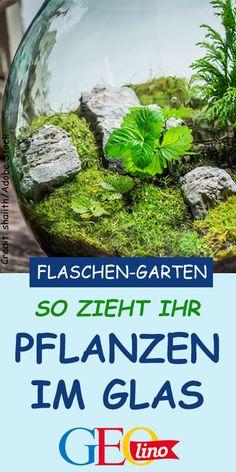 Blechschild XXL Flora Blumen Gelbe Narzisse