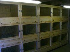 Hasenstall Kaninchenstall »  Kaninchenställe, Hasenställe, Chinchillastall, Degustall, Meerschweinchen, Nagerturm, Deckstall, Wurfbox, Vitrine