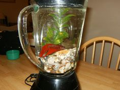 Eek! This fish tank blender would make an unforgettable prop for a model kitchen!