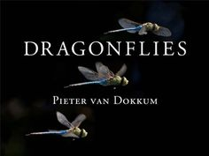 Dragonflies by Pieter van Dokkum:  The wonderful world of dragonflies, with amazing photo that made me find out how these insects, mating, become a single thing with the shape of a heart. Very romantic ;)