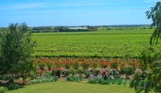 Views from Mulberry Lodge out over the rose gardens with vines as far as you can see- Willunga, McLaren Vale, South Australia