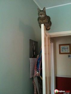 19 Pics of Amazing Balancing Cats