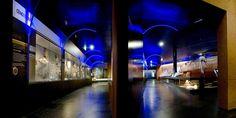 Museum d'Histoire Naturelle Toulouse made by James @lamaisonjames #art #design #retails #cabinetmaker #museum