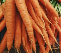 quick and healthy breastfeeding snacks, easy breastfeeding snacks, string cheese and carrots Vegetable Garden For Beginners, Gardening For Beginners, Vegetable Gardening, Recetas Anticancer, How To Store Carrots, Fruits And Vegetables, Veggies, Eating Vegetables, Winter Vegetables
