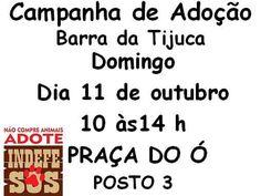 BONDE DA BARDOT: RJ: Adoção de cães e gatos na Barra da Tijuca, neste domingo (11/10)