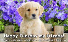 Happy Tuesday Quote