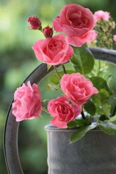 Pink roses, cottage charm in the garden Love Rose, My Flower, Pretty Flowers, Pink Flowers, Beautiful Roses, Beautiful Gardens, Romantic Roses, Rose Fotografie, Ronsard Rose