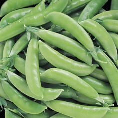 Super Sugar Snap Peas-58 days. If you like Sugar Snap, you'll love Super Sugar Snap! This improved variety sets plumper pods earlier in the season, with remarkably higher yields, and far better disease resistance than its predecessor. Enjoy the exceptionally heavy harvests of sweet, thick-walled, stringless pods straight out of the garden, on a fresh veggie plate, or cooked in your favorite dish. Super Sugar Snap's vigorous, healthy vines average about 5 feet tall