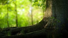 Trees Hd Wallpapers