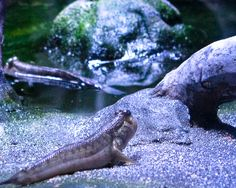 Aquarium On Pinterest Aquascaping Freshwater Aquarium