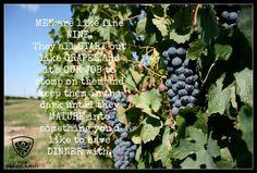 #wine #quotes #picomaccario