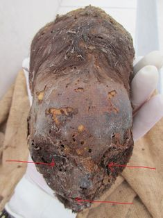 The Most Amazing Paracas Elongated Skull Found So Far; New Born Baby - Hidden Inca Tours
