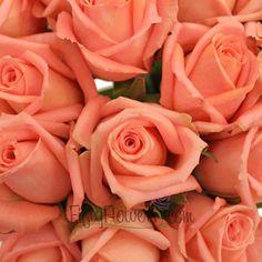 Lolly Pop Bright Peach Rose Close 350 f48211e5 Diy Wedding, Wedding Flowers, Wedding Coral, Wedding Ideas, Lolly Pop, Orange Roses, Types Of Flowers, Calla Lily, Rose Petals