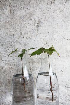 trees in vases via http://www.scandinavianlovesong.com/