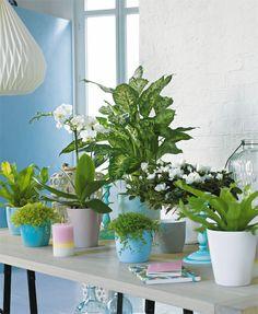 Mixer plantes vertes et cache-pots colorés pour un résultat printanier !
