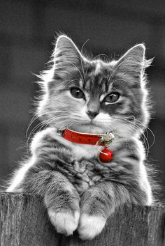 A touch of colour #red #cat #cute