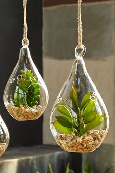 Show your real love for Mom with Pier 1's Faux Succulent Glass Ornament Set. Three faux succulents, each in its own glass terrarium-style ornament, create a design statement all on their own. Displayed on mantels, hung from ornamental trees or capturing reflected light in a window, each introduces a moment of natural tranquility to an up-close-and-personal setting.