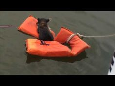 Maryland Boaters Rescue a Stranded Baby Raccoon From the Water With a Life Preserver
