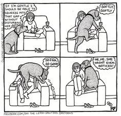 Bassett hound!