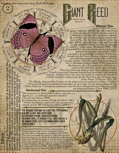 Giant Reed Book of Shadows page, Ritual Poisonous Plants - Book of Shadows - Wiccan Spell Book, Witch Spell, Wiccan Spells, Magick, Witchcraft, Pagan, Herbal Magic, Magic Herbs, Poisonous Plants