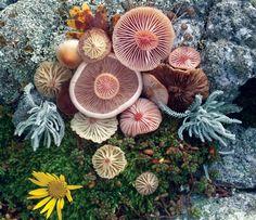 voiceofnature: Mushroom landart byJill Bliss - Jijilechat