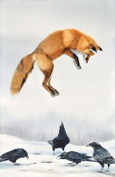"""Fox Pouncing with Ravens"" Original watercolor by Turi MacCombie 